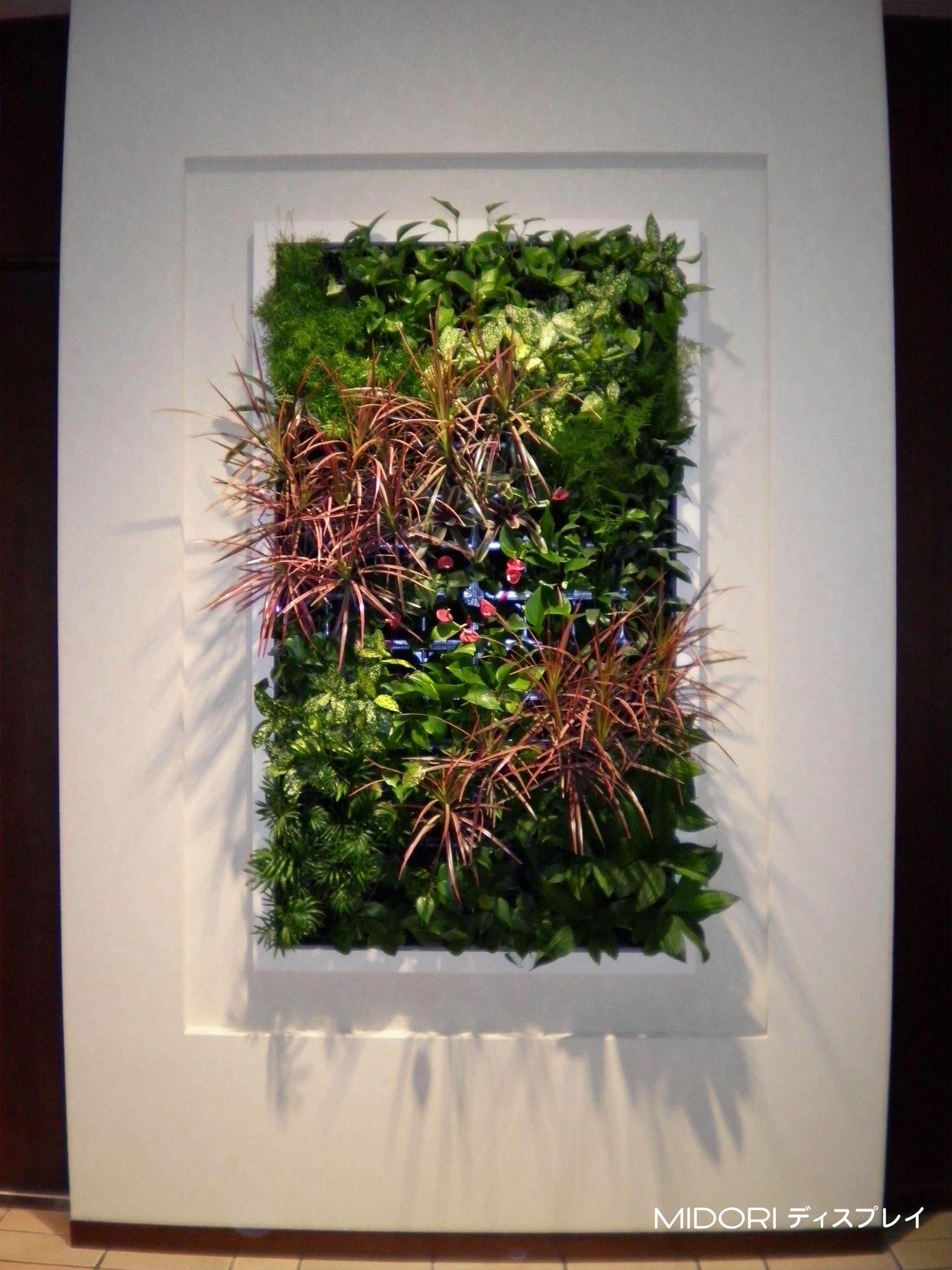 立体感のある壁面緑化
